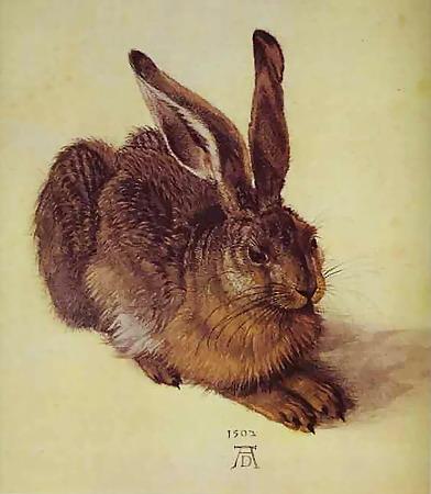 А. Дюрер. Кролик. 1507